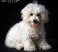Bea in Studio, ritratto di cagnolina con famiglia!